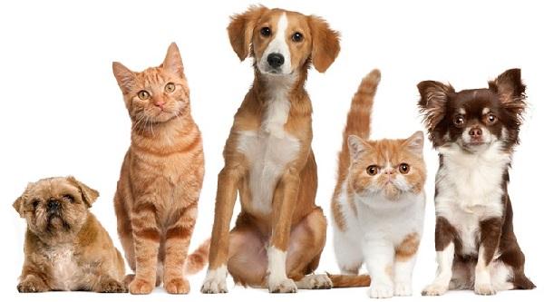 Dịch vụ trông giữ cho chó mèo tại Hà Nội
