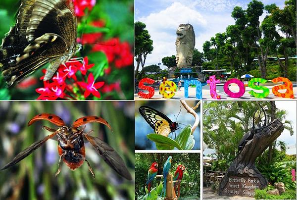 Vương quốc côn trùng và công viên bươm bướm giống như một góc thu nhỏ của thiên nhiên