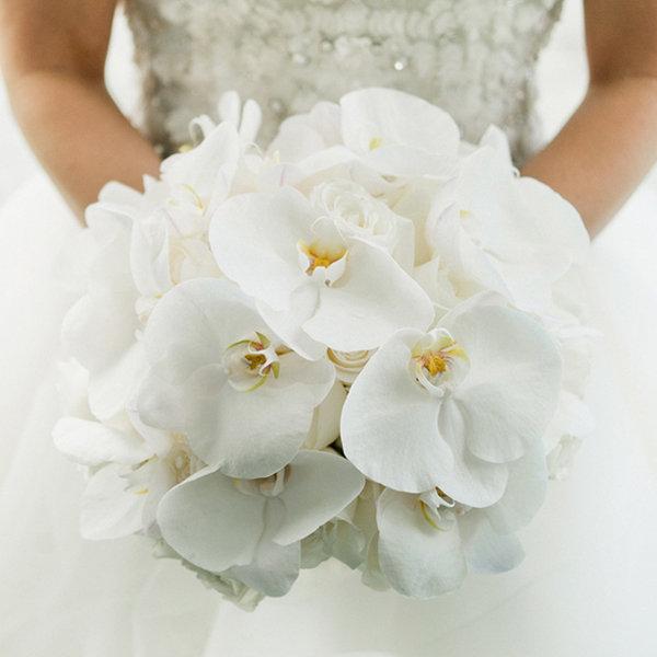 ý nghĩa hoa lan hoa cưới
