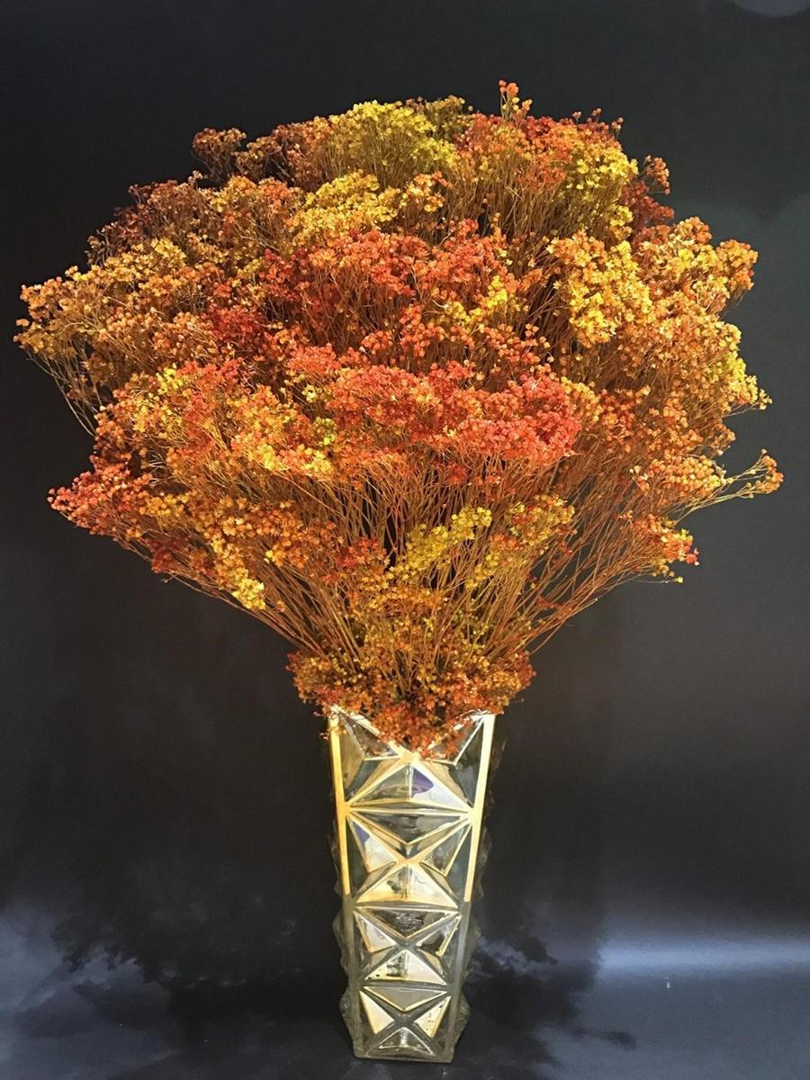 Hoa khô trang trí màu sắc nổi bật cho không gian sống thêm phần sinh động