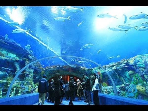 Viện hải dương học - địa điểm dành cho người thích khám phá biển