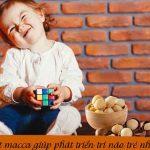 Hạt macca giúp tăng trưởng trí não cho trẻ nhỏ