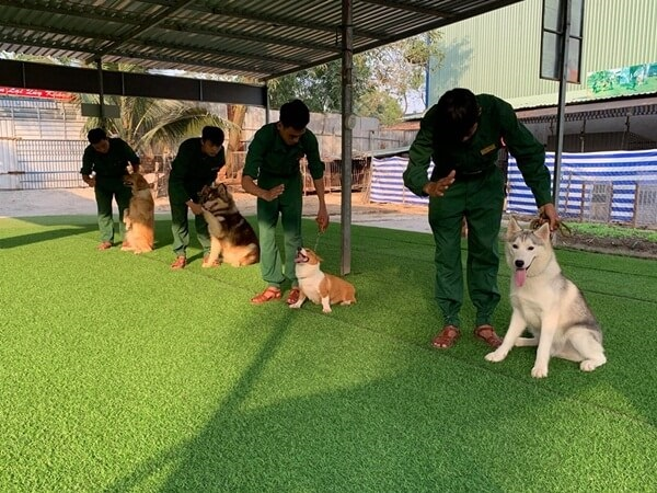 Phương pháp huấn luyện chó cảnh tốt sẽ không dùng bạo lực trong giảng dạy