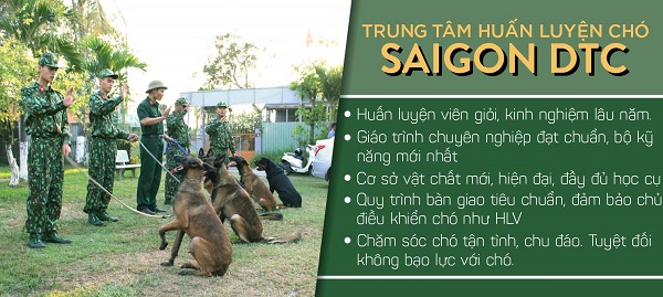 Phương pháp huấn luyện chó cảnh chuyên nghiệp ở trung tâm huấn luyện chó Sài Gòn DTC